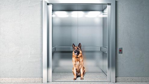 Cortinas de infrarrojo para la seguridad de nuestras mascotas en elevadores